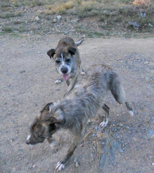 Puppiesoct6k