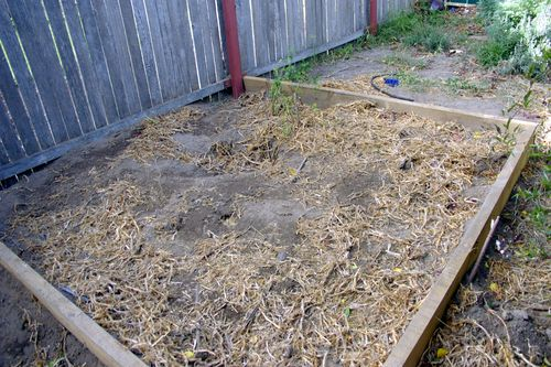 the aftermath of my veggie patch