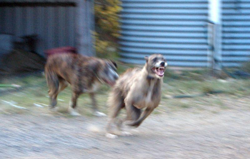 Puppiesoct13b